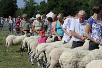 Record Breaking Sheep Entries to Penrith Show 2014